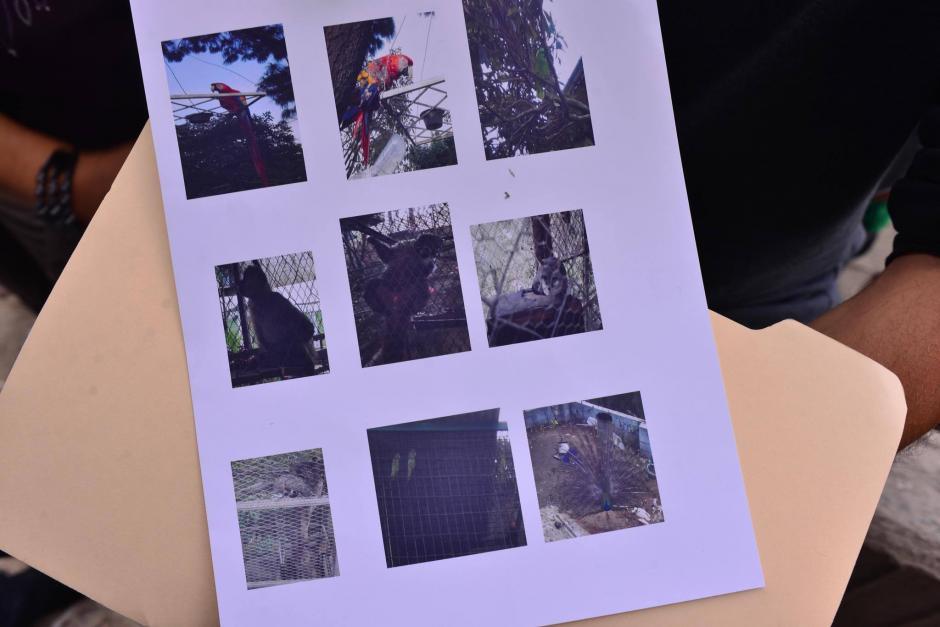 Las personas llevan fotografías de los animales que van a registrar. (Foto: Jesús Alfonso/Soy502)