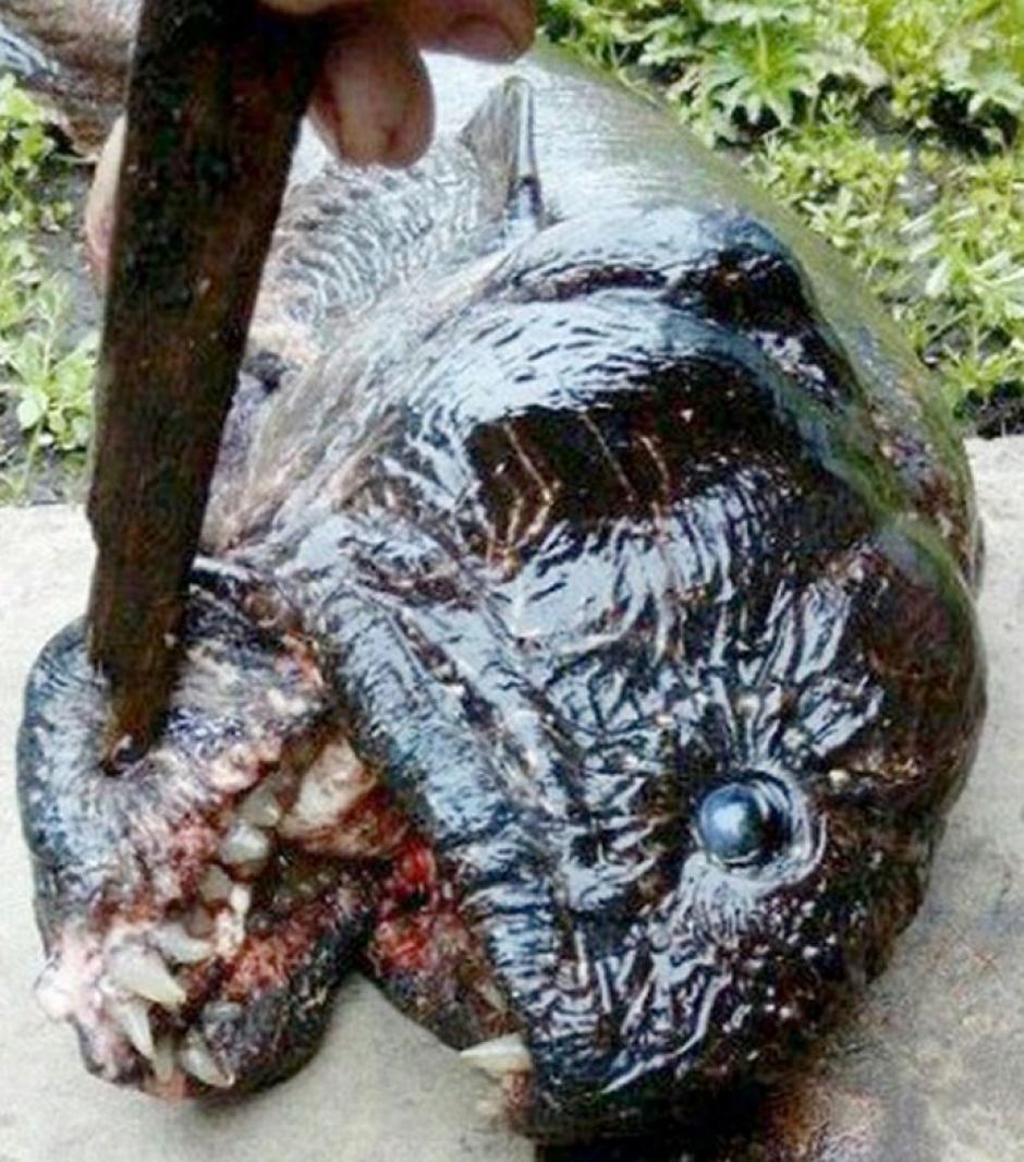 El mosntruoso animal será entregado a las autoridades para su análisis. (Foto: 24 horas)