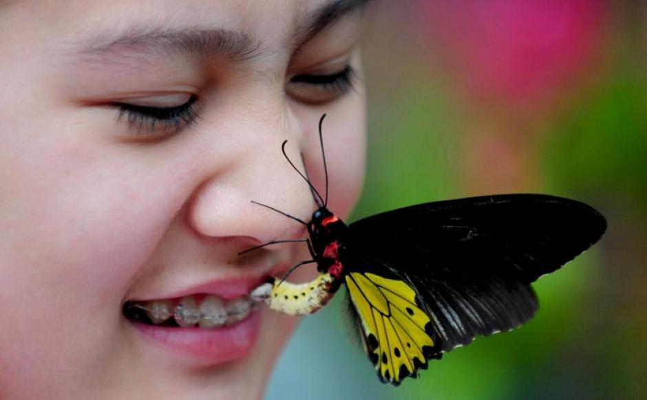 """Una mariposa posa en la cara de un turista en el """"valle de la mariposa"""" en Shenyang, provincia de Liaoning, noreste de China. El valle de la mariposa, con una colección de cerca de 400 mariposas de más de 20 especies, se abrió al público el 28 de junio, informó la prensa local. (Foto: AFP)"""