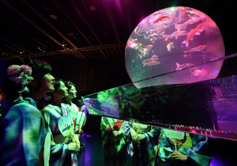 """Las mujeres que usan kimono de verano, peces de colores reloj """"Yukata"""" durante el preestreno para la prensa de """"Eco Edo Nihombashi Arte Acuario 2014"""", exposición en Tokio, el 10 de julio de 2014. La exposición de peces de colores de dos meses de duración se inicia hoy 11 de julio.(Foto: AFP/ Toshifumi KITAMURA)"""