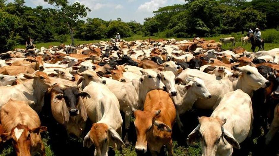 Los ganaderos no tendrían que pagar IVA, ISR ni aranceles por importaciones. (Foto: holaciudad.com)