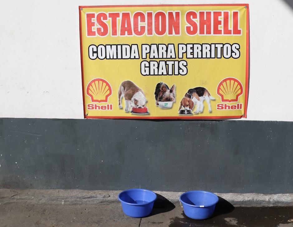 Esta iniciativa es para dar una mano a los perritos que la necesitan. (Foto: Alejandro Balan/Soy502)