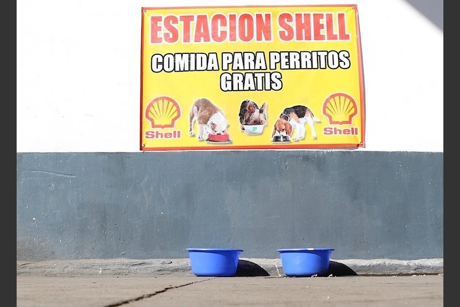 En esta gasolinera los perritos son bienvenidos. (Foto: Alejandro Balan/Soy502)