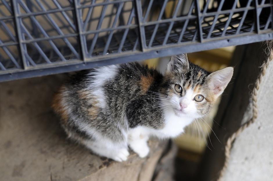 Los gatitos también tienen su espacio en este lugar. (Foto: Esteban Biba/Soy502)
