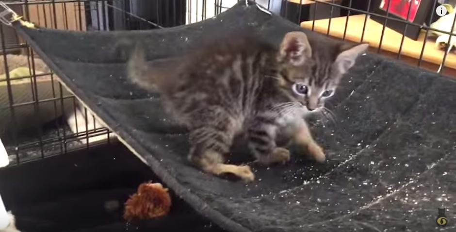Pipe es un gatito valiente. (Foto: Youtube)