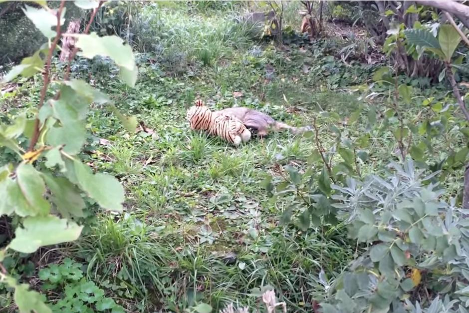 Cuando llega al jardín se detiene para jugar.(Foto: YouTube)