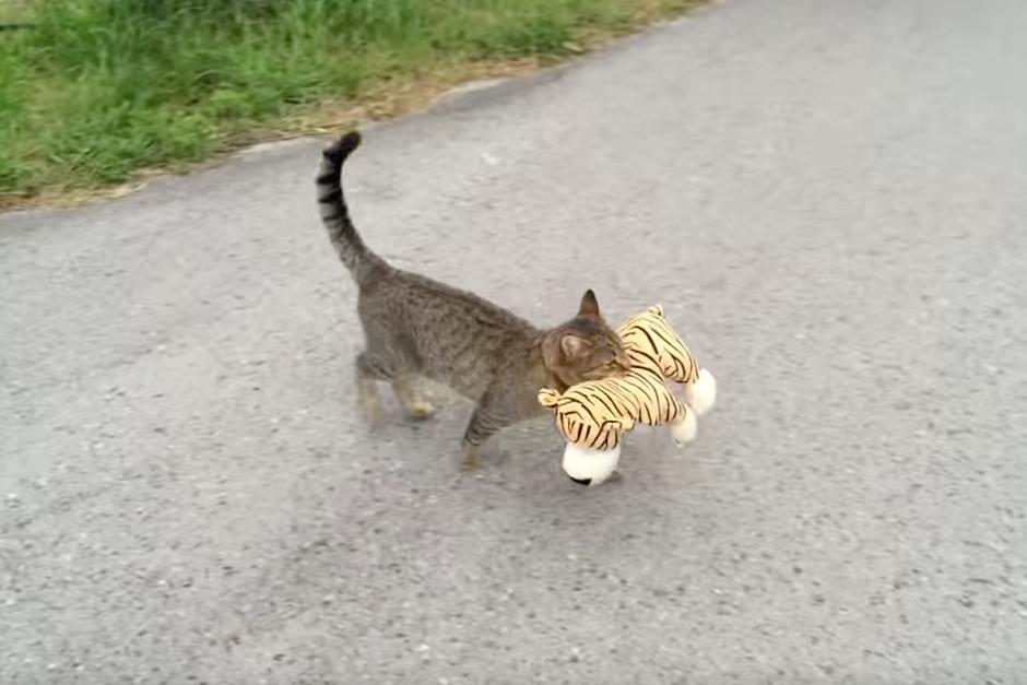 Después de robarse el peluche camina a su casa.(Foto: YouTube)