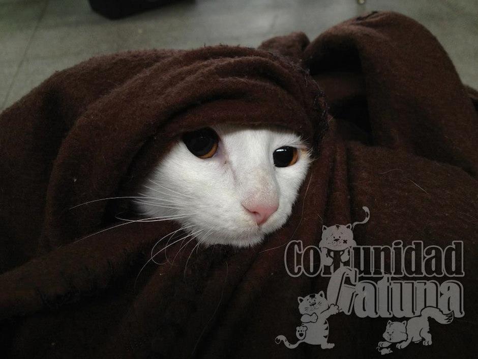 Este lindo minino está tiernamente protegido del frío (Foto: facebook/Comunidad Gatuna)