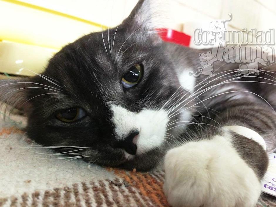 Los gatos son tiernos y ayudan a reducir el estrés. (Foto: facebook/Comunidad Gatuna)