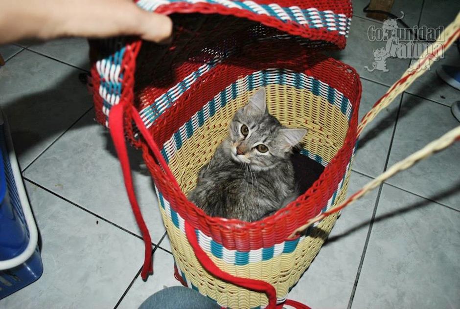 Este gatito fue transportado para asistir a la jornada de castración felina. (Foto: facebook/Comunidad Gatuna)