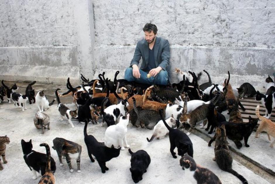 La acumulación de animales puede ser peligrosa para las mascotas. (Foto: lalocadelosgatos.com)