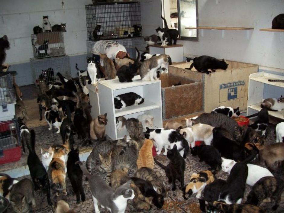 Quienes acumulan animales de compañía rara vez son tratados por un psicólogo. (Foto: rescateanimalmx.wordpress.com)