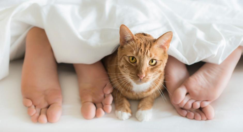 No solo los perros pueden hacerte dormir mejor, sino que también los gatos. (Foto: goodhousekeeping.com)