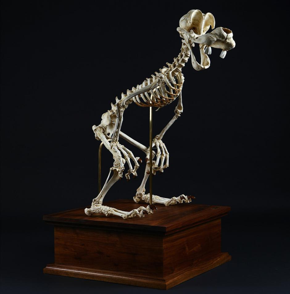 Gooffy simpre será gracioso, sin importar animado o únicamente con su figura esquelética.(Foto: iflscience.com)