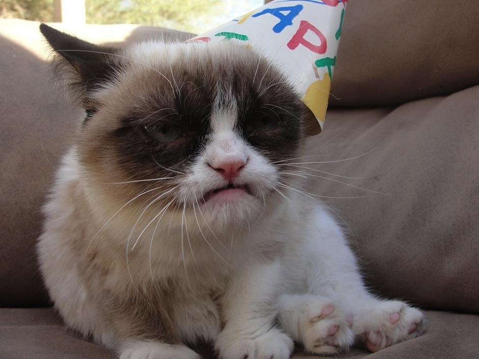 Esta linda felina ha robado el corazón del mundo entero gracias a sus famosos memes. (Foto: Grumpy cat oficial)
