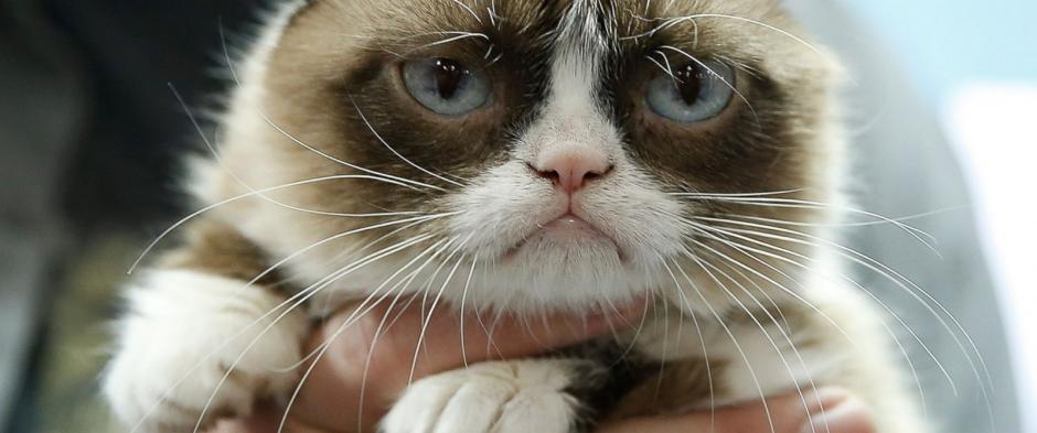 Grumpy cat es uno de los mininos más famosos en las redes sociales (foto:abcnews.go.com)