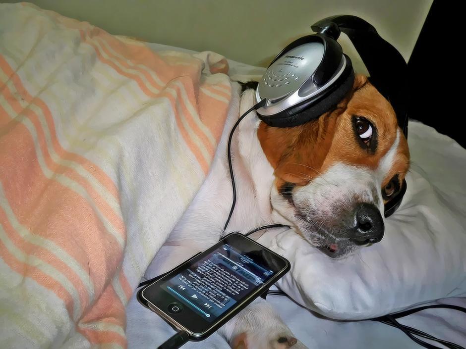 El rock suave también relajó a los perritos. (Foto: Guía Saludable)