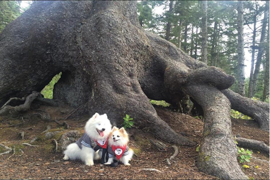 Zen era un perro sin hogar quien fue adoptado por Paulina Pérez, dueña de Hoshi. (Foto: Instagram/the.fluffy.duo)
