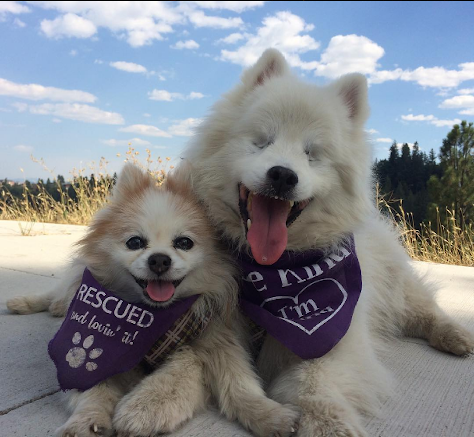 Ambos perros tienen una gran amistad y Zen es el lazarillo de Hoshi, quien es completamente ciego. (Foto: Instagram/the.fluffy.duo)