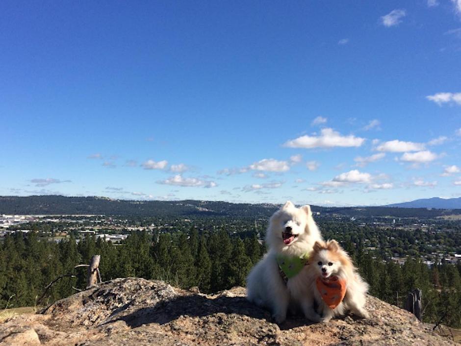 Aunque ambos perros tengan correas separadas, siempre caminan cerca uno del otro. (Foto: Instagram/the.fluffy.duo)