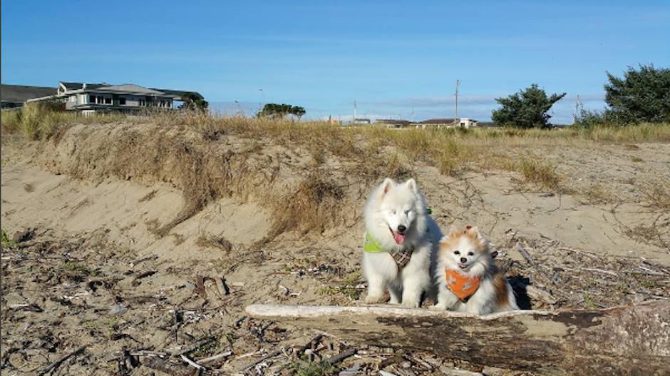 La cuenta en Instagram de los perritos tiene más de 15 mil seguidores. (Foto: Instagram/the.fluffy.duo)
