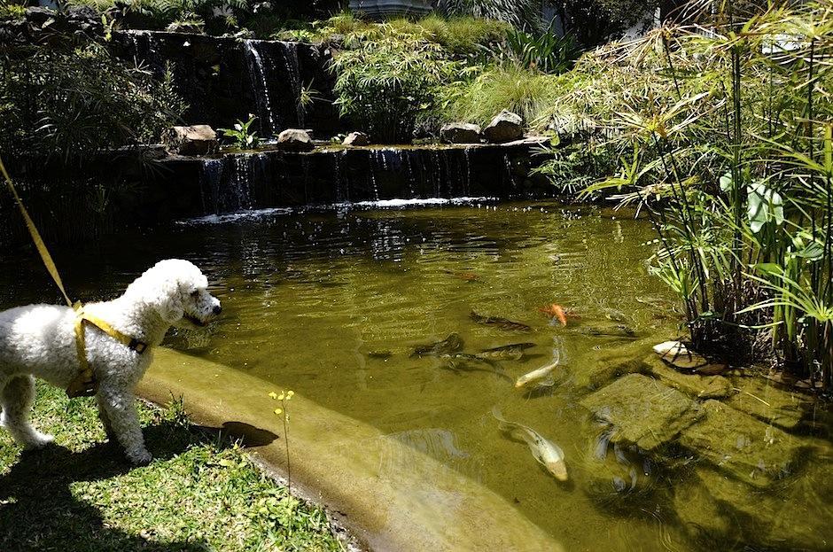 """""""Pet friendly"""" es el distintivo de los hoteles que lo permiten. (Foto: Selene Mejía/Soy502)"""