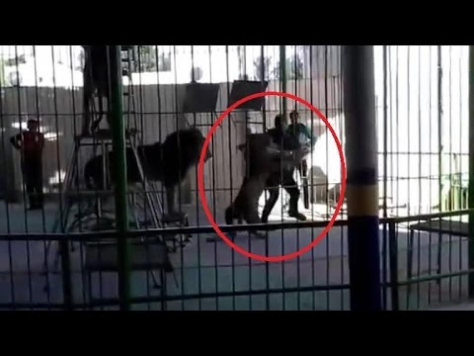 El enfadado león pierde el control y se abalanza sobre su domador. (Imagen: captura de YouTube)