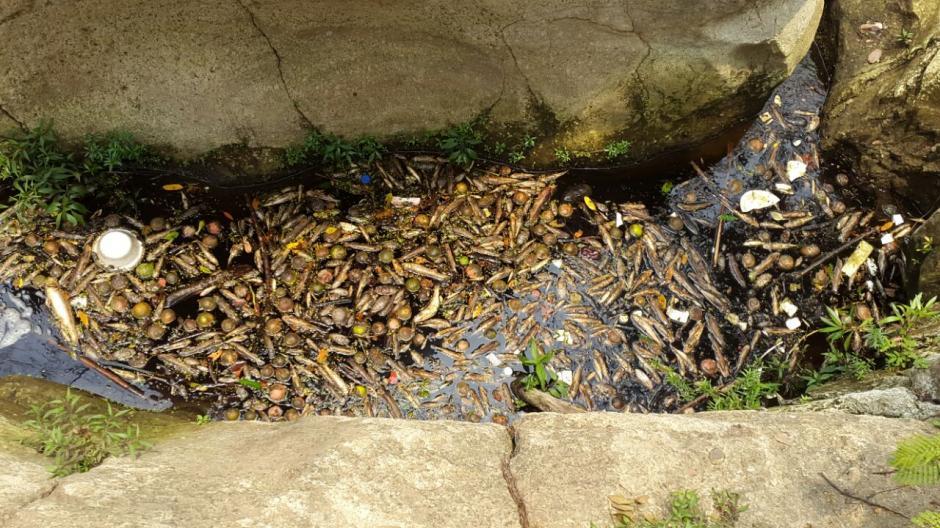 La descarga del líquido en el río ha provocado la muerte de peces. (Fotos: Cortesía El Diario de Hoy)