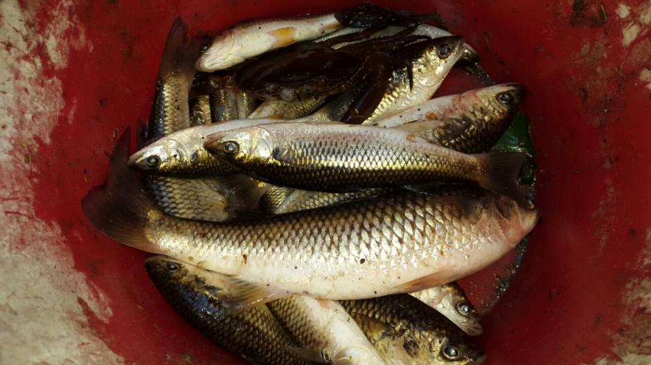 Miles de peces han muerto. (Fotos: Cortesía El Diario de Hoy)