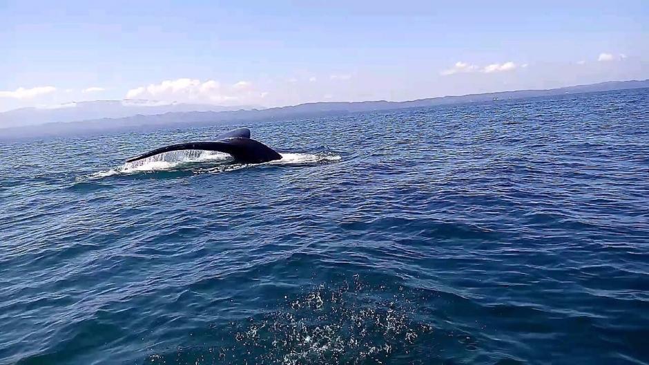 Una ballena se encuentra varada en la bahía de Amatique en Izabal. (Foto: Daniel Bro)