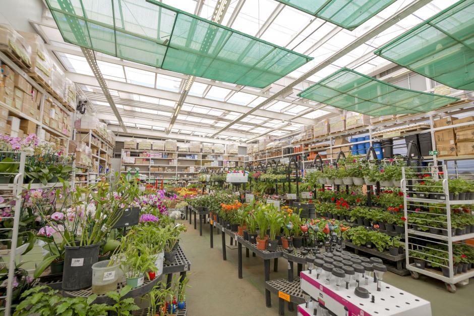 Las tiendas contarán con un área de vivero y productos para el exterior del hogar. (Foto: George Rojas / Soy502)