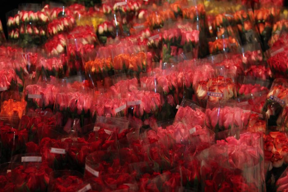 Las rosas se almacenan durante 24 horas en un cuarto frío con una temperatura de entre cero y 2 grados centígrador para conservar su frescura (Foto: Jesús Alfonso/Soy502)
