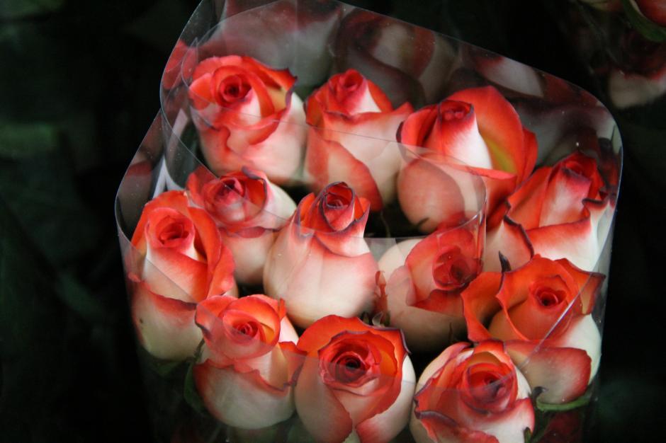 Ramo de rosas listo para ser exportado. (Foto: Jesús Alfonso/Soy502)