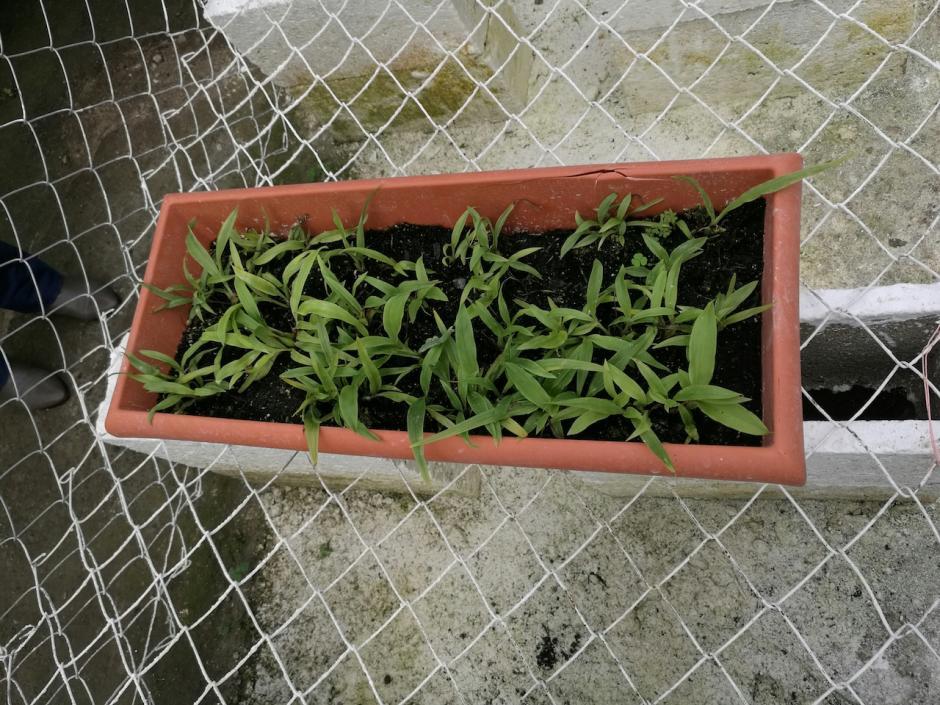 Deben transcurrir al menos cinco o seis años para que la orquídea sea adulta. (Foto: Fonacon)