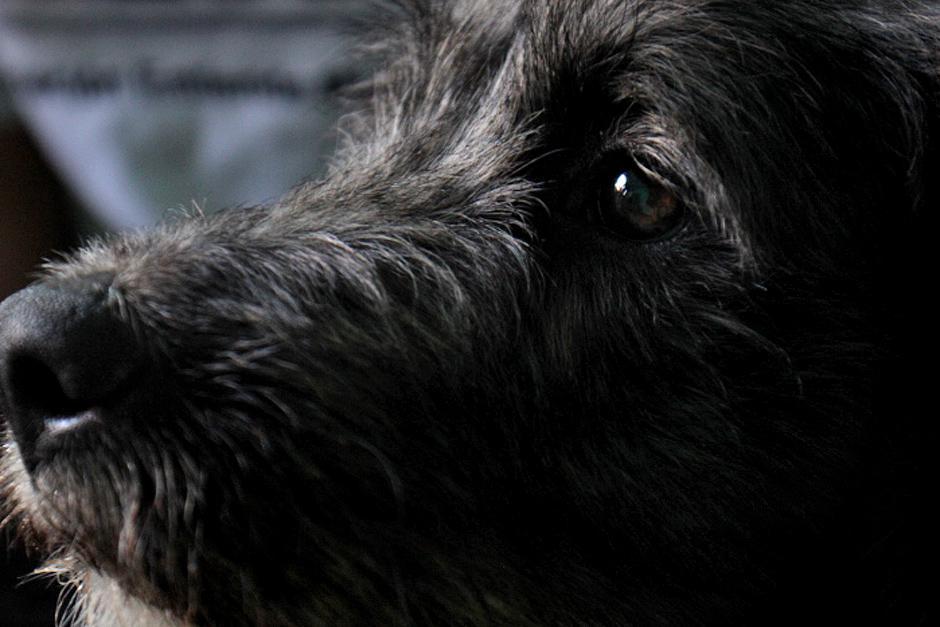 Todo tipo de razas de perros fueron castrados, tampoco importó su tamaño o edad