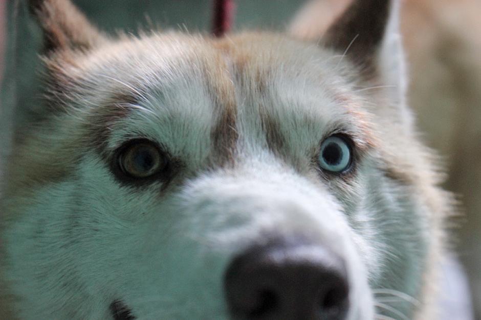 En esta jornada se castraron poco más de 25 perros y la siguiente fecha de castración tendrá lugar en Tiquisate. (Foto: José Dávila/Soy502)