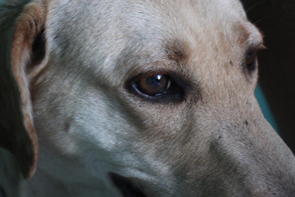 La castración es una manera de evitar la sobrepoblación de mascotas y por ende, también se evita que muchos terminen en las calles