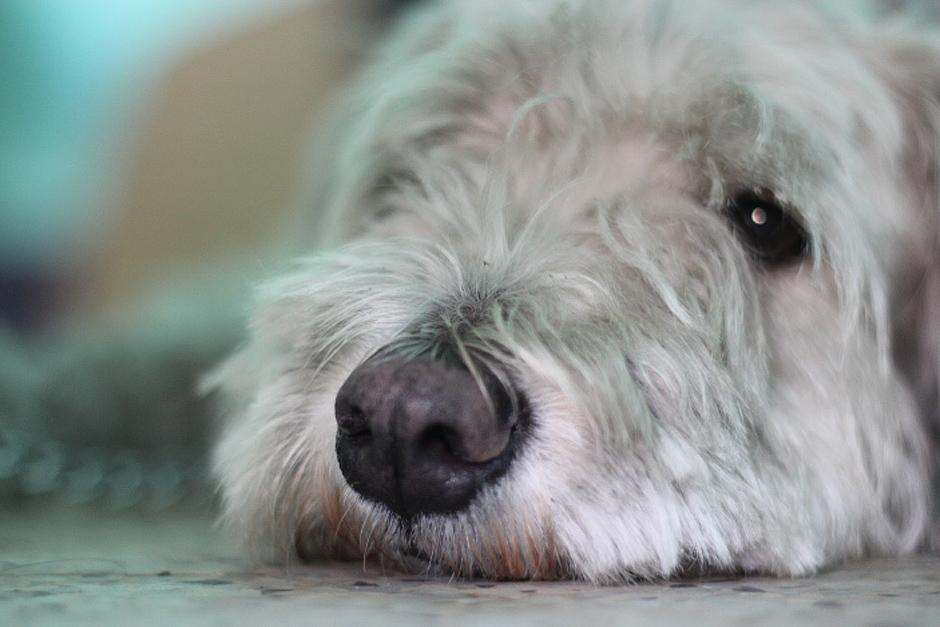 """""""Puppy"""" apenas acaba de ser rescatado en la calzada Aguilar Batres y pronto será castrado para ser puesto en adopción. (Foto: José Dávila/Soy502)"""