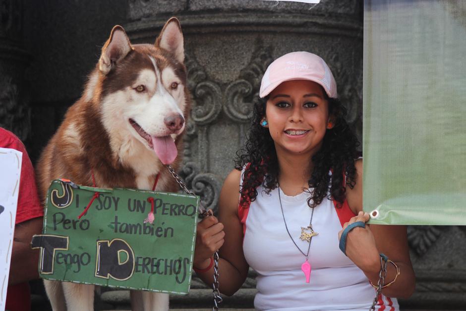 Las mascotas acompañaron a sus dueños a la manifestación.(Foto: Alejandro Balan/Soy502)