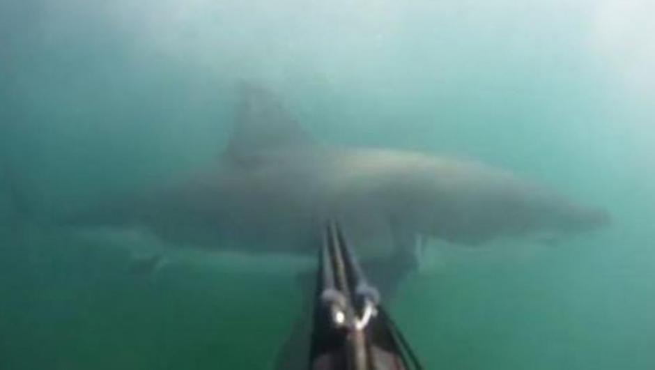 El momento en el que Tyler McQuillen estuvo frente a frente a un tiburón. (Foto: Twitter)