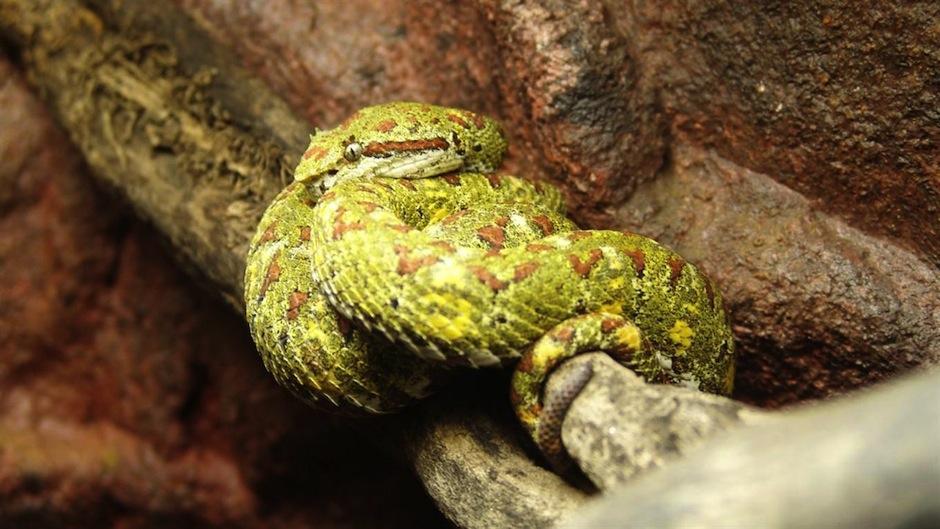 El lugar alberga una especie que con una mordida te derrite la piel. (Foto: BBC)