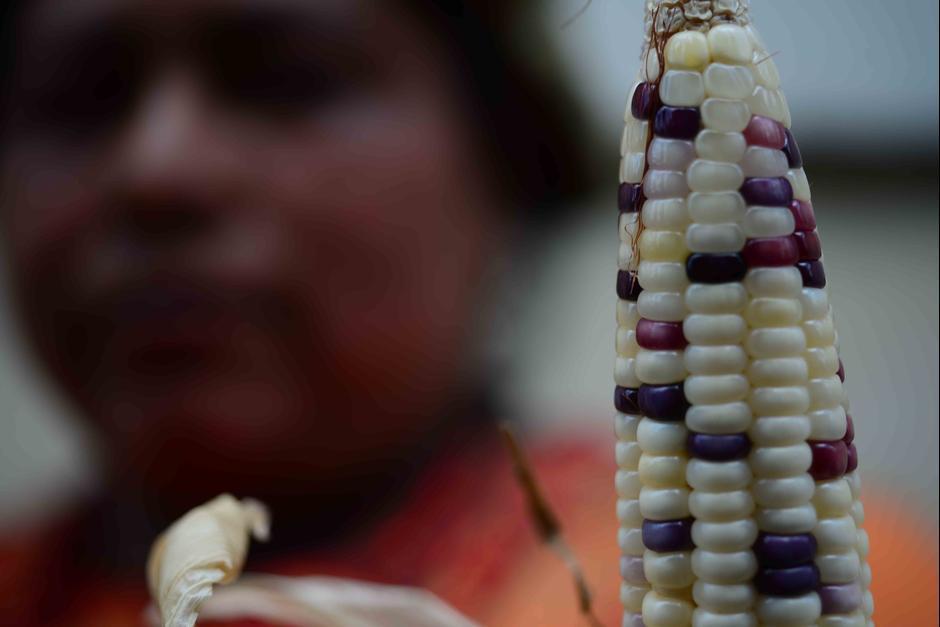 El maíz ha estado presente en momentos históricos que han marcado a Guatemala desde la existencia de los mayas. (Foto: Jesús Alfonso/Soy502)