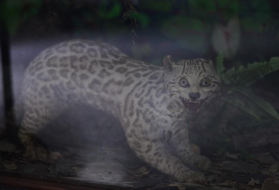 Ejemplares en peligro de extinción se estudian en el lugar. (Foto: Selene Mejía/Soy502)