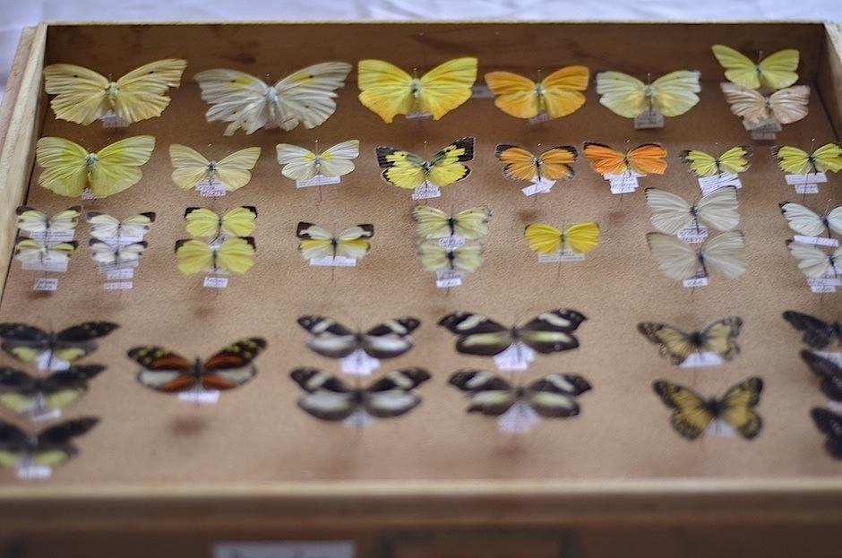 Una interesante exposición de insectos se celebra en mayo. (Foto: Selene Mejía/Soy502)