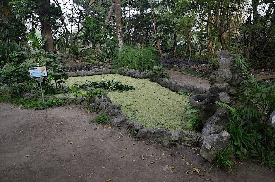 """Esta planta acuática es pariente de la """"Cola de Quetzal"""". (Foto: Selene Mejía/Soy502)"""