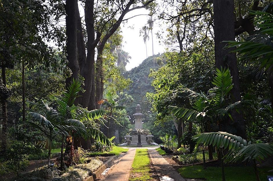 El Jardín Botánico posee diversidad de especies nacionales. (Foto: Selene Mejía/Soy502)