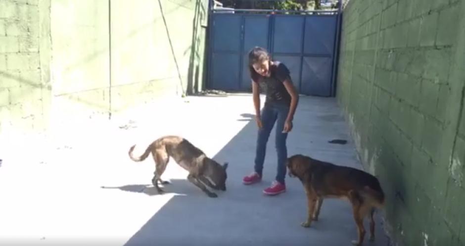 Los voluntarios juegan con los perritos adultos. (Foto: captura de pantalla)