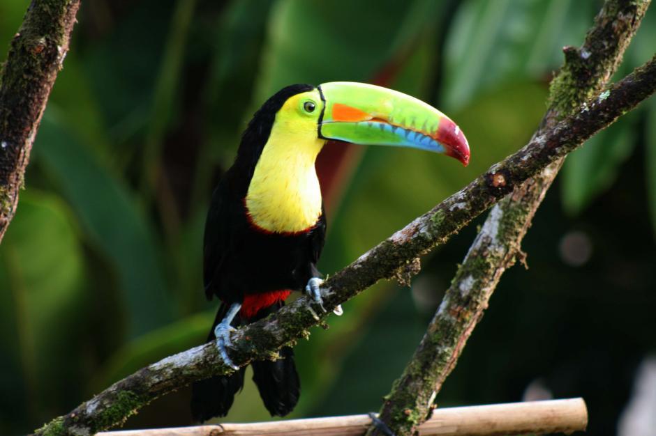 La fauna de Costa Rica más cerca que nunca. (Foto: Costaricaretirement)