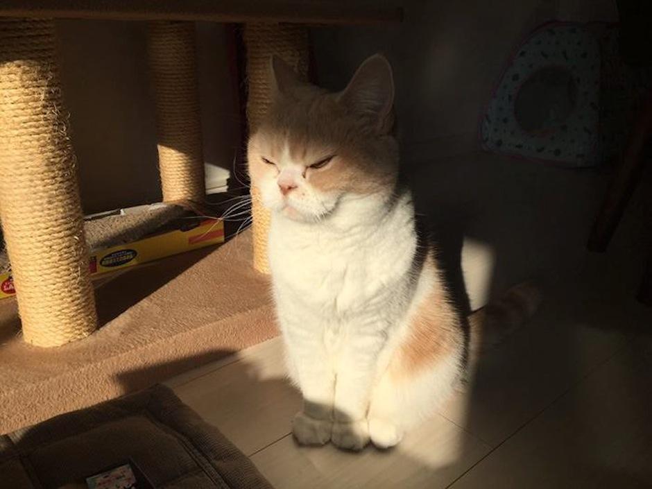 """Koyuki es llamada el """"Grumpi Cat"""" japonés por su expresión. (Foto: Gato Lector)"""