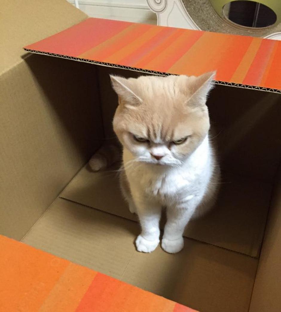 Los amantes de los gatos seguro se enamorarán de Koyuki. (Foto: instagram)